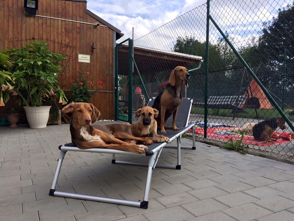 Hundepension am Birkensee - Eigene Hunde