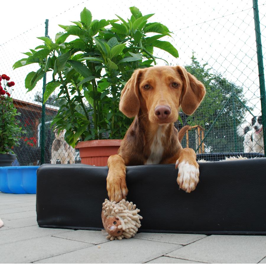 Gesundheitsbetreuung - Hundepension am Birkensee