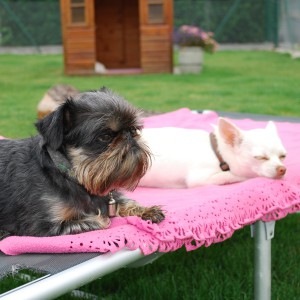 Hundepension und Hundetagesbetreuung - Hundepension am Birkensee