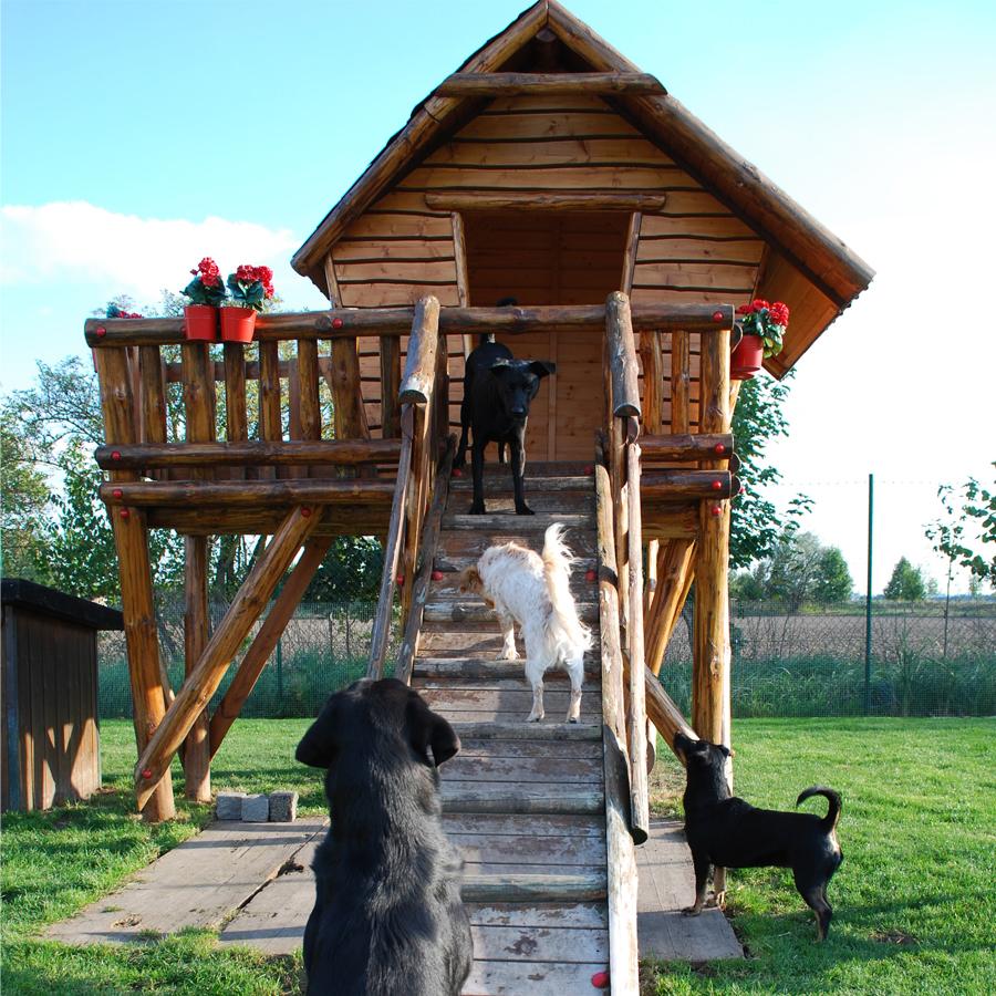 Hundetagesbetreuung in München - Hundepension am Birkensee