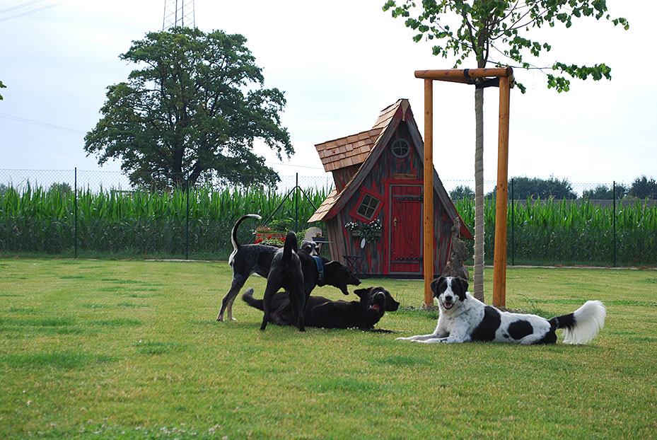 Hundepension in München - Hundepension am BIrkensee